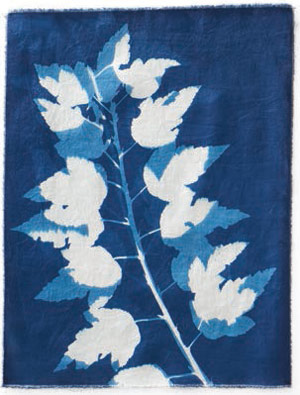 Eight Steps To Successful Cyanotype Prints On Fabric